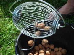 Walnut Wizard Emptying into a bucket